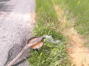 Бурение скважин на воду с гарантией. Наро-Фоминский район